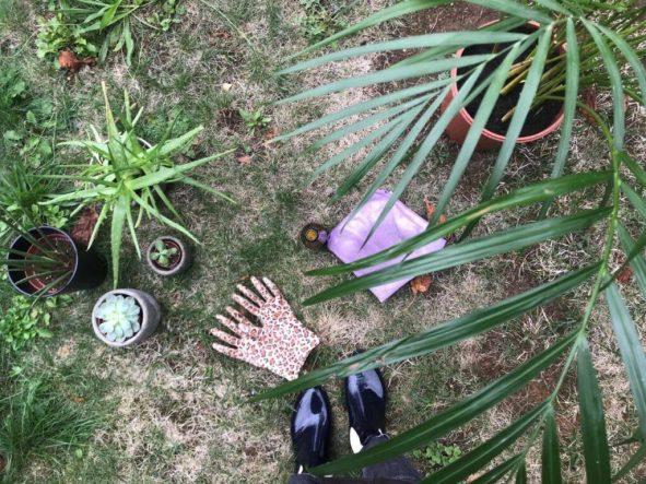 photo représentant les plantes vertes et le matériel