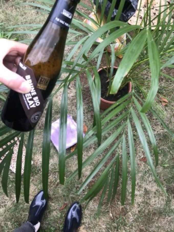 photo représentant la bouteille de bière et les plantes vertes