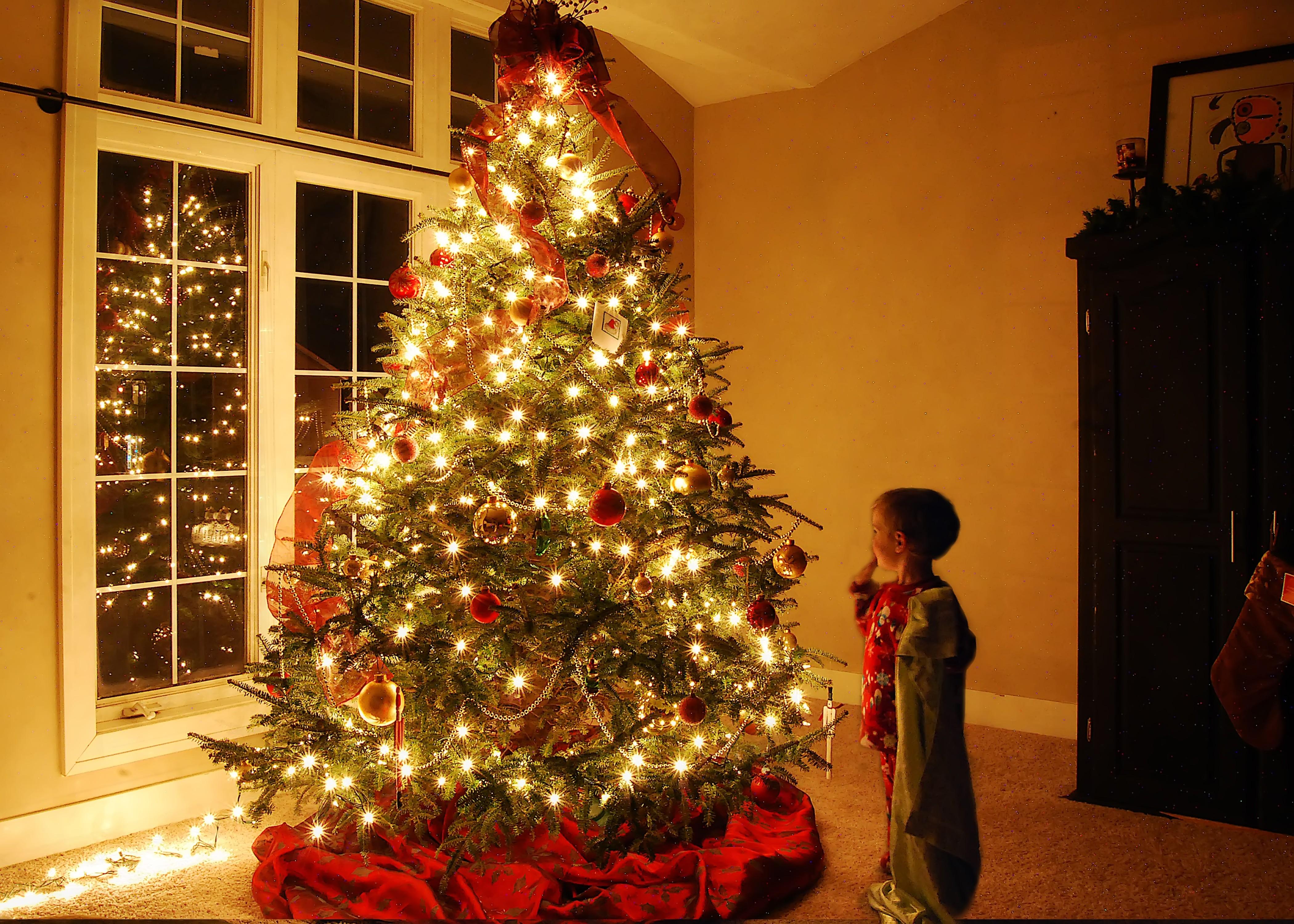 Christmastree Respite Douglas Blog