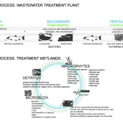Dicot Flower Diagram Blank Printable Pwm Wiring For Hho Systems Plants Phytoremediation Decomposition ~ Elsavadorla