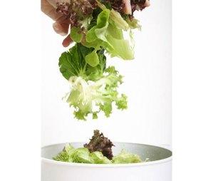 bagged_salads_recall