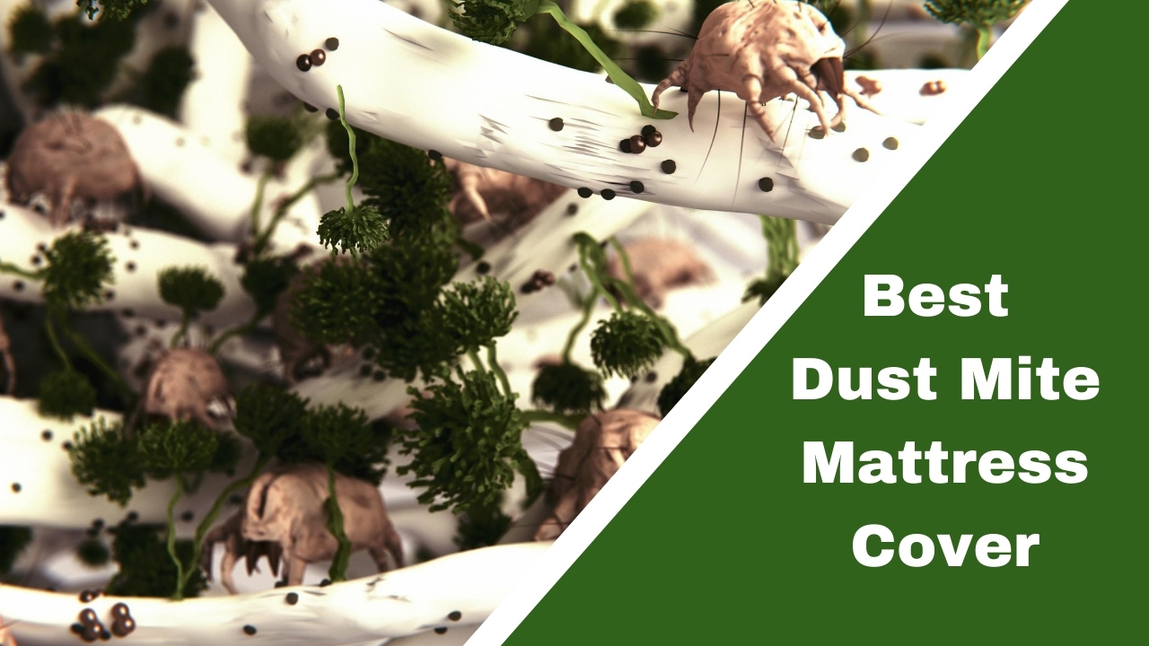 Best Dust Mite Mattress Cover