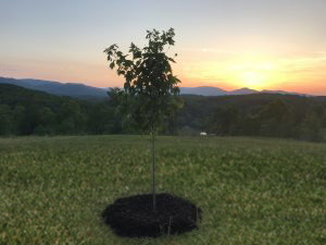 Memorial Tree