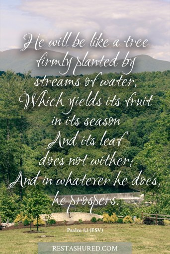 Bible verse text for Psalm 1:3 (ESV)