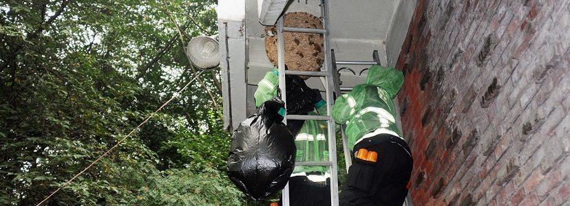 pestcontrol-services