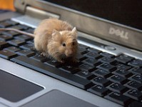 signs-of-a-mouse-infestation-keyboard