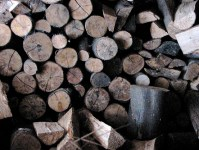 termite-infestation-firewood-2