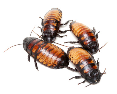 Pest Control Horror Story of the Week: Roach Invasion