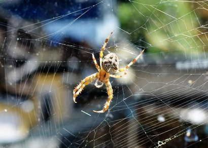 Spiders Love Living in New York City. Here's Why.