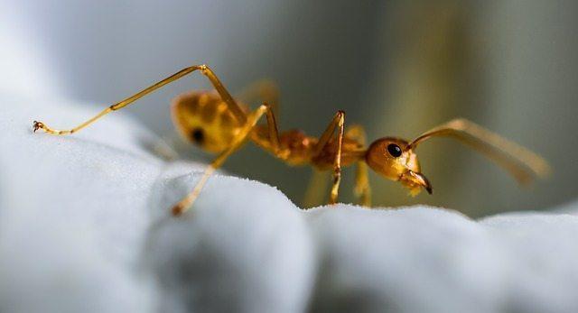 Spring Brings Infestation of Ants