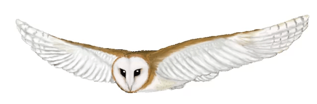 snowy-owl-clipart-flying-10.png
