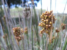The grasses and their seed heads fascinate me