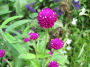 Little 'pops' of colour