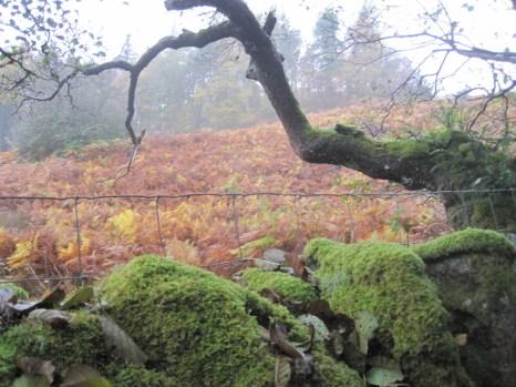 Moss and bracken