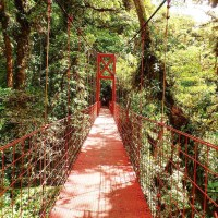 5 Photos(Reasons) to Visit Monteverde Costa Rica