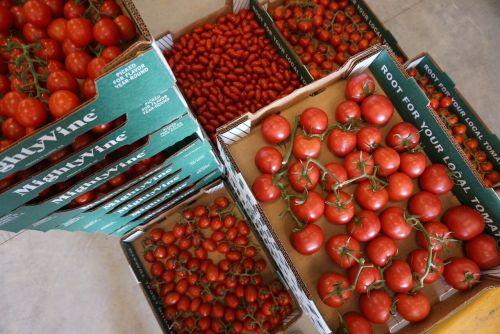 Mighty Vine tomatoes/Photo: Danny Murphy