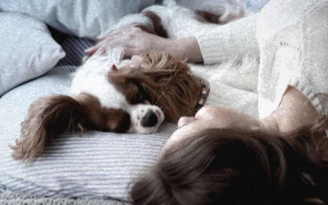 ¡A dormir con nuestro amigo peludo!