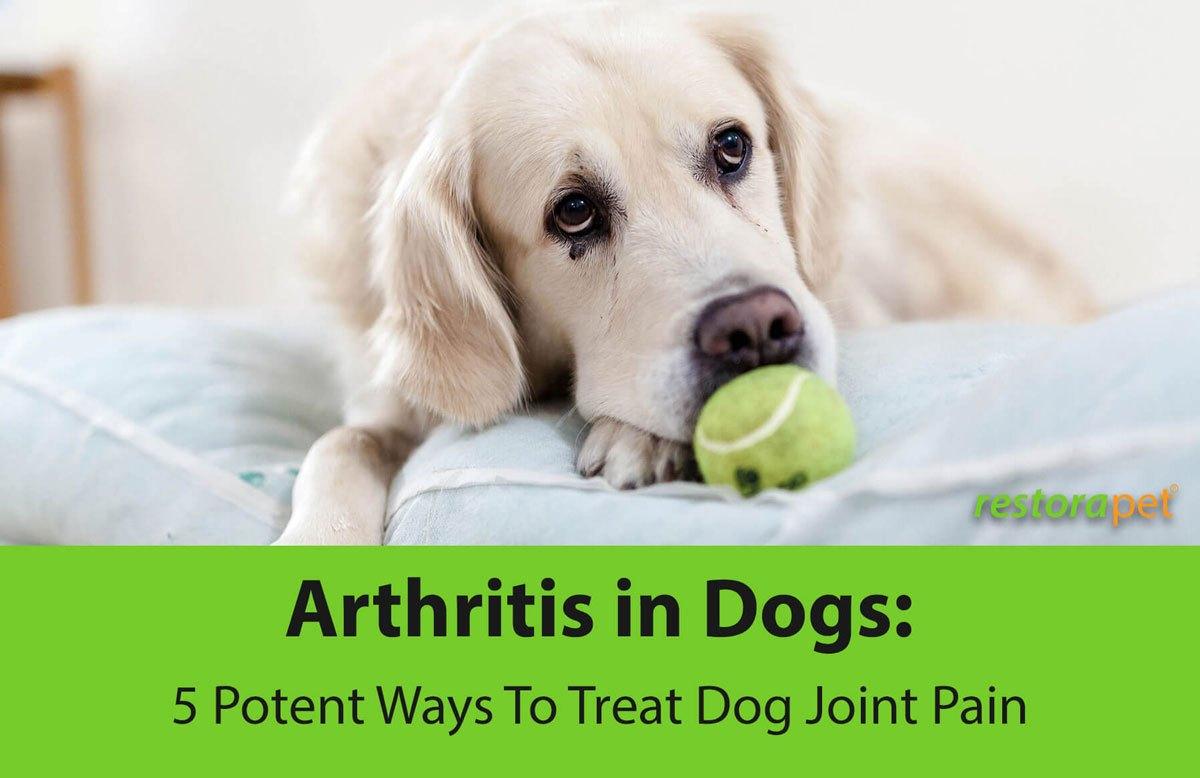 Arthritis - Dog Joint Pain