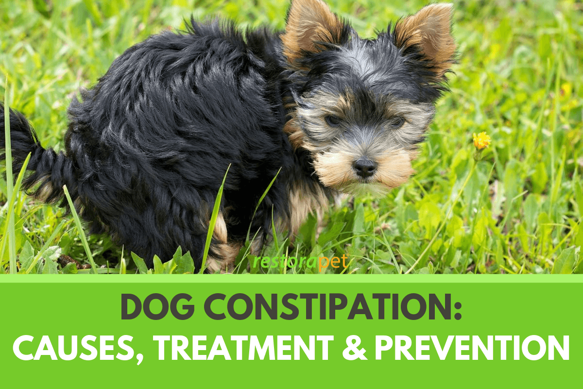 Dog Constipation. Causes, Treatment and Prevention