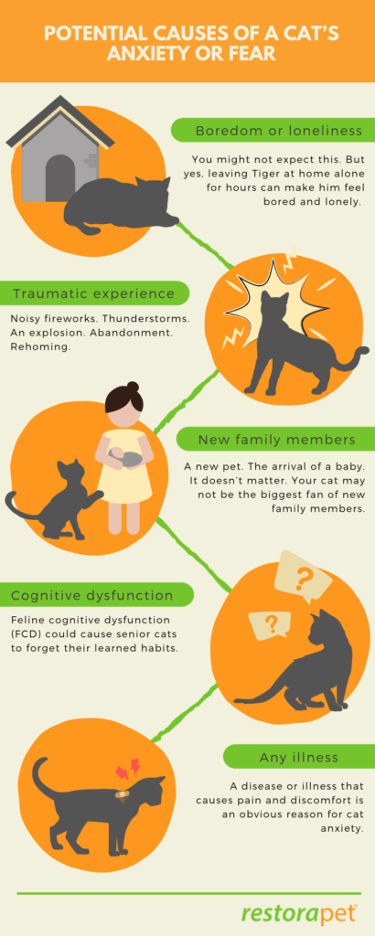 Potential causes of stress and anxiety in cats