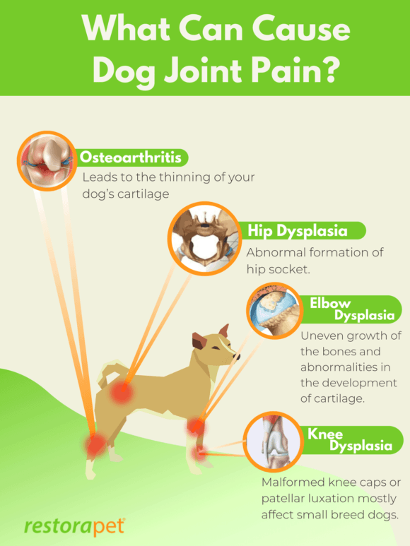 What can cause dog joint pain?