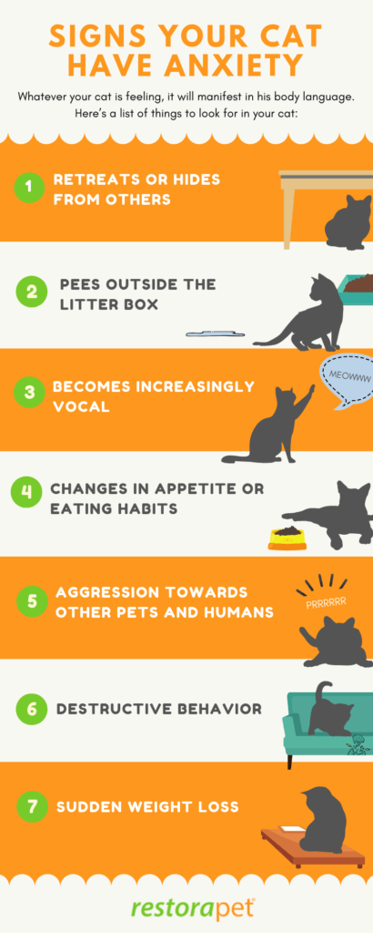 Top signs that your cat has anxiety