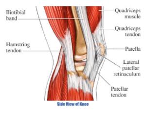 Sports   Restore Therapeutic Massage