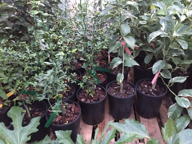Pink Lemon Trees and Exotics