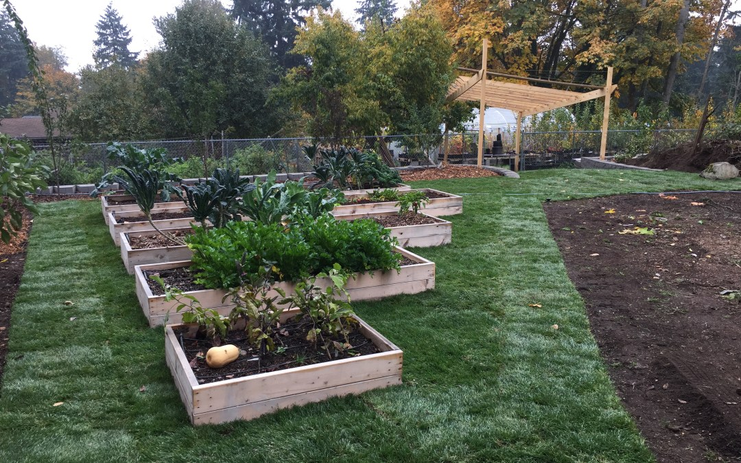 Tips For Your Raised Cedar Garden Beds