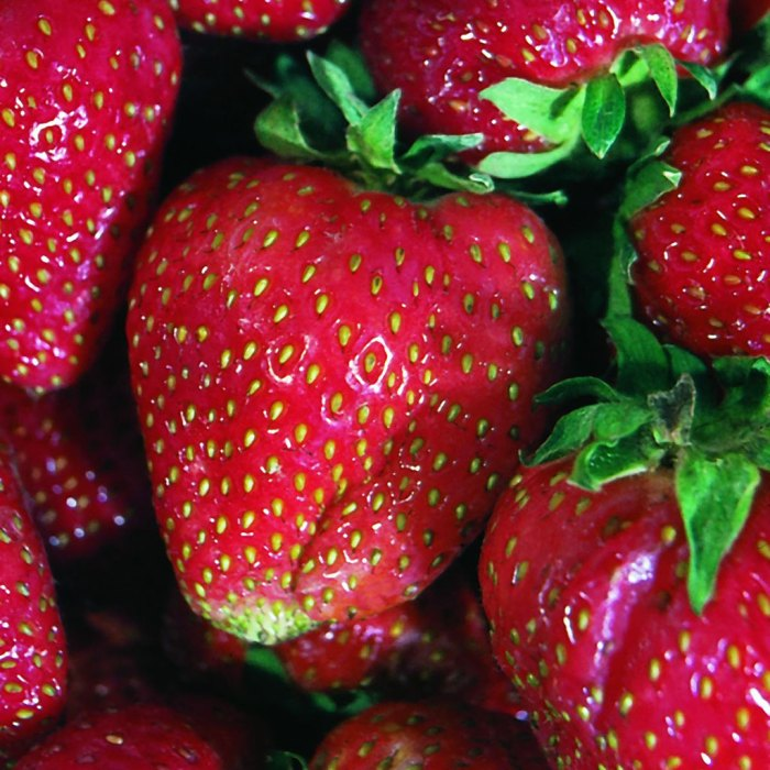 strawberry Quinault