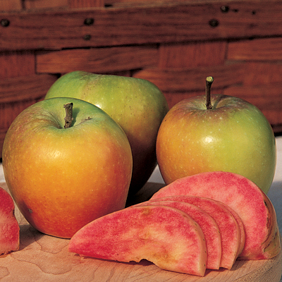 mountain rose red fleshed apple
