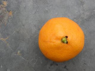 mandarin shirokolistvennyi
