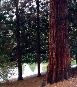 laurelhurst-park