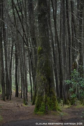 bosque verde 1