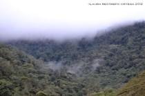 48-neblina