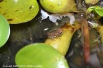 amphibians 22