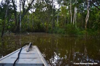Río Caquetá 11