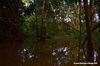 Río Caquetá 12