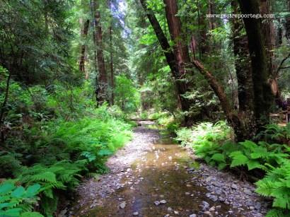 SF Muir Woods 9