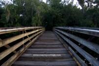 Sawgrass Lake 7