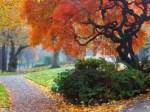 Fall and Fabulous