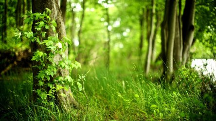 forest background hd 8704 9032 hd wallpapers Resume Producers