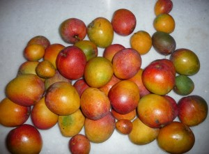 Mangoes From My Two Trees
