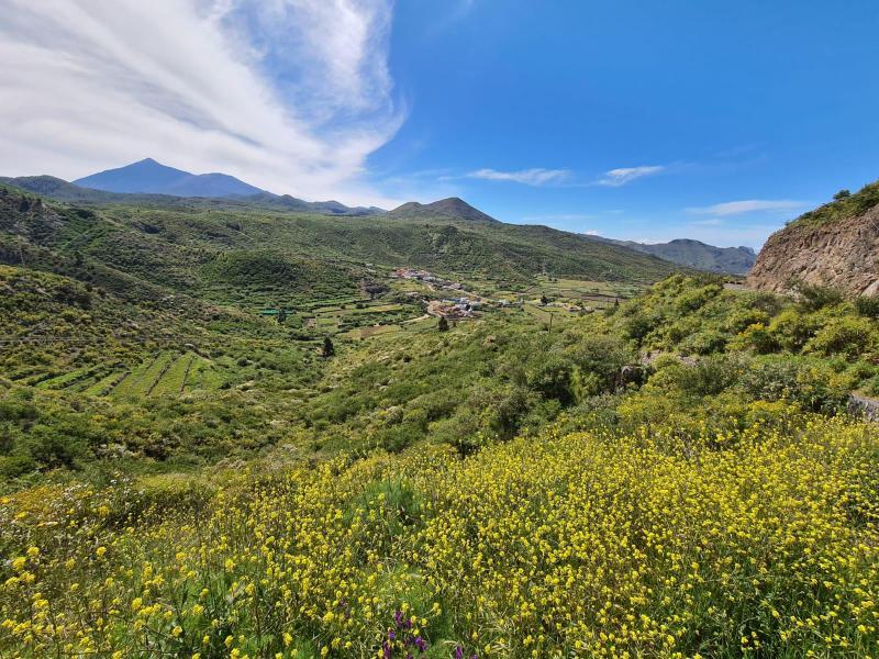 munte Tenerife