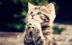 Cute Kitty Prays for Our Future