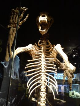 Esqueleto de Oso. Cosmocaixa. Foto: Marta Menacho.