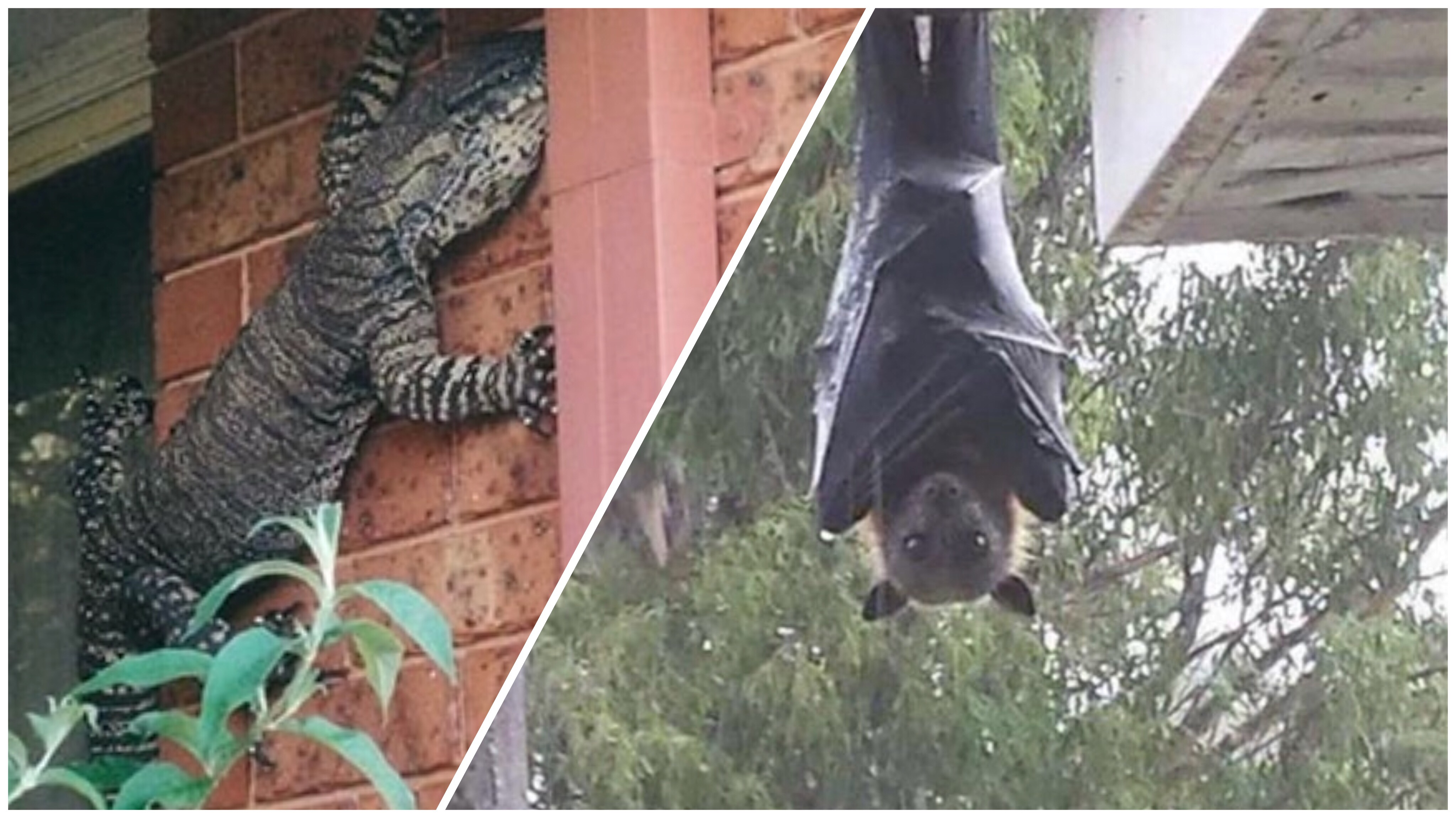 Australia Is The Land Of 'Nope', And Here Are 24 Pictures Proving It