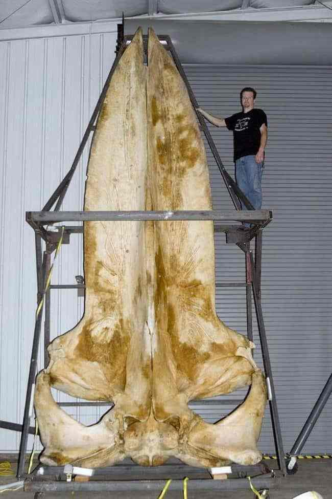 whale-skull-rare-things-pictures