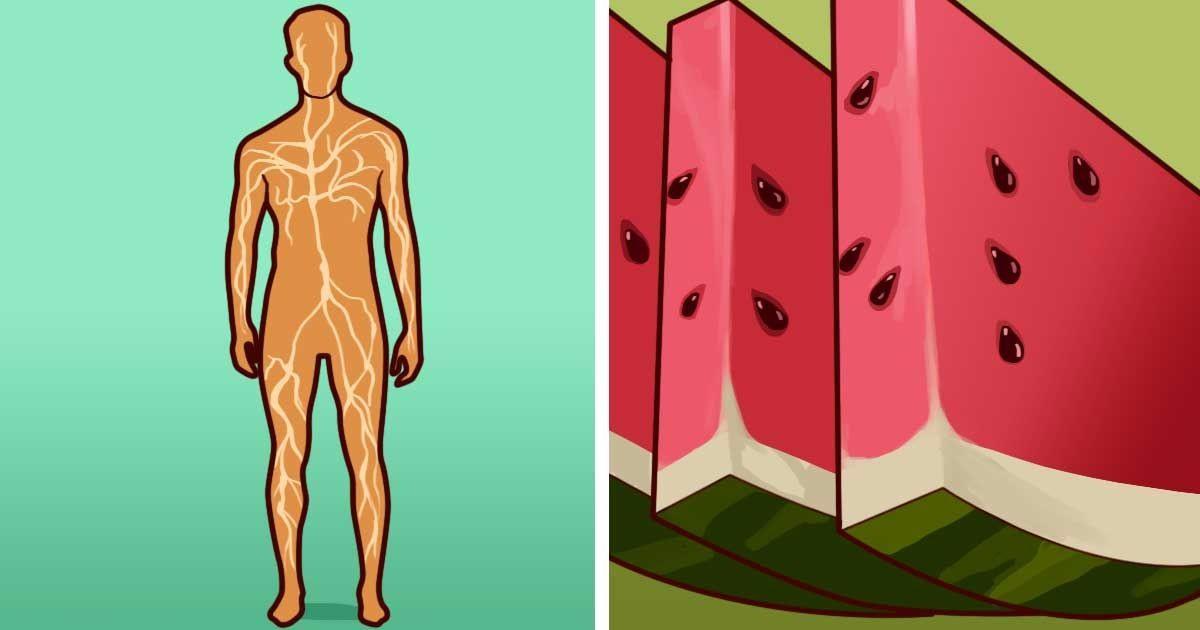 Iubești Pepenele verde? Atunci trebuie să știi toate beneficiile, ce efect are asupra Tensiunii / Pielii / Inimii