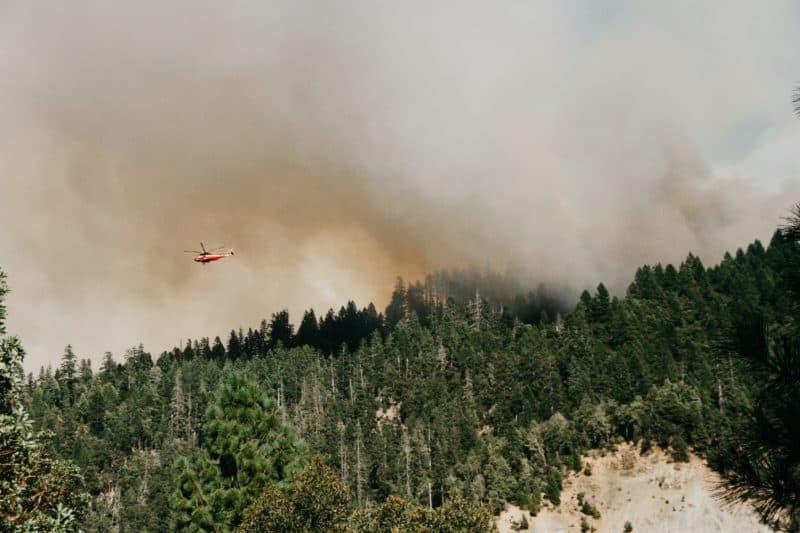 contributi foreste danneggiate da incendi